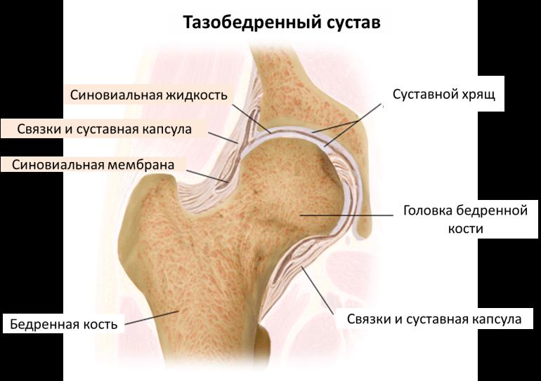 Лучшие протезы по замещению тазобедренного сустава клиника лечения суставов